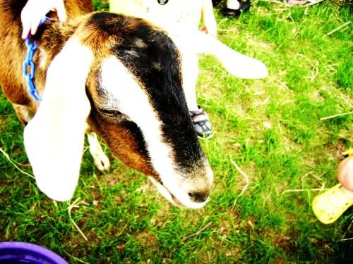 05.09.09 - The Lilac Festival 06