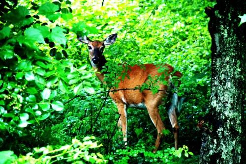 06.30.09 - Letchworth State Park 010