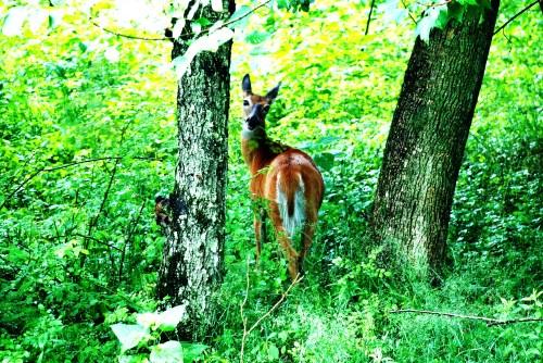 06.30.09 - Letchworth State Park 08